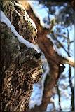 kleiner Cache hoch im Baum