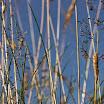 Donal_McQuaid__Phoenix_Park_-_A_view_from_the_grass.jpg