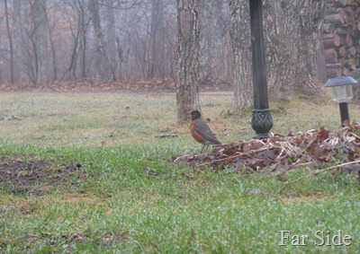 First Robin March 23 2012
