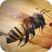 Apis Bee 4D Live Wallpaper