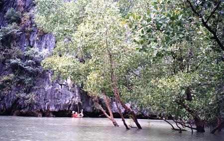 214. mangrove Thailanda.jpg