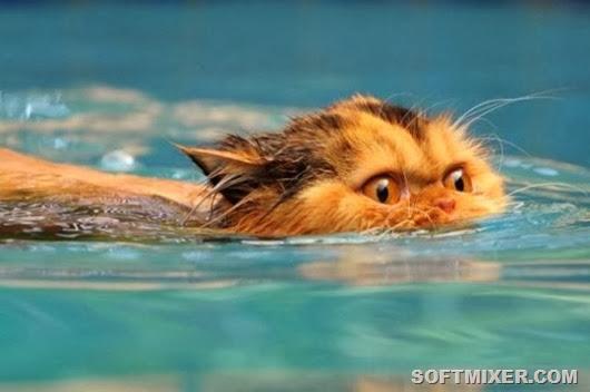 kupanie-koshek