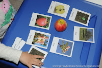 Botany Unit: Parts of an Apple and Tomato