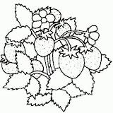normal_11-coloriage_fruit.jpg