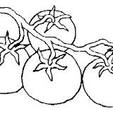 tomate-%252525285%25252529.jpg