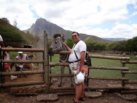 18. Mangaind o zebra.JPG