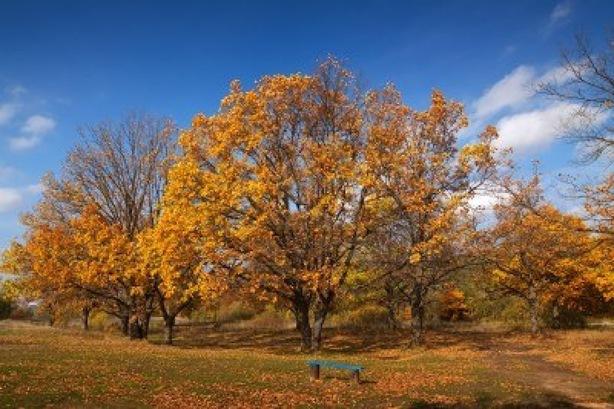 12942401-vista-del-hermoso-bosque-de-robles-en-otono