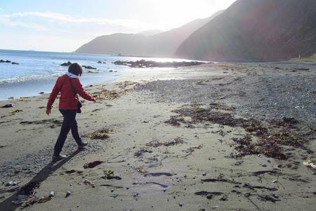 Obiective turistice Wellington: la plimbare pe plajele salbatice din vest