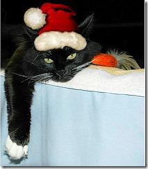 gatos gorro papá noel (1)