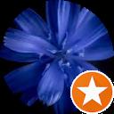 Image Google de Tricote