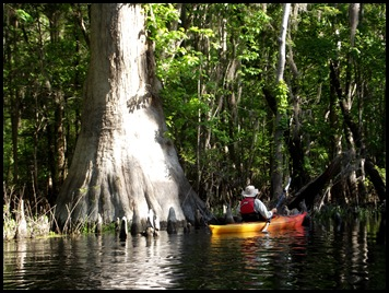 kayaking the Ichtucknee 008