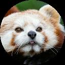 Image Google de Marie. G