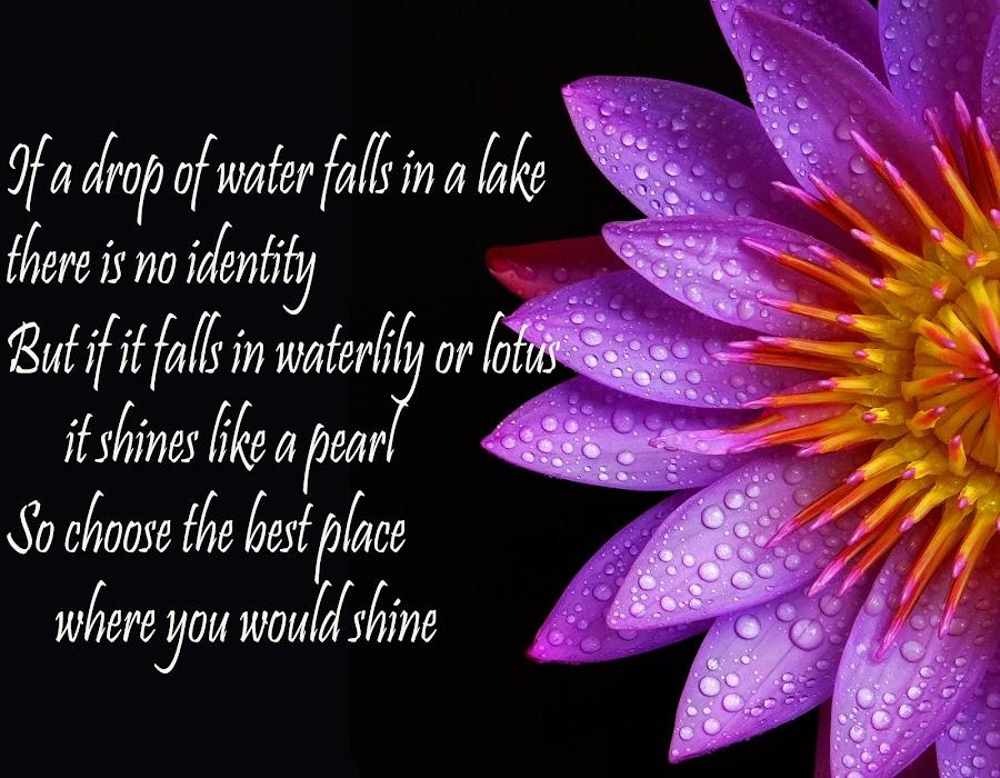 drop on petals by Asif Bora - Typography Quotes & Sentences (  )