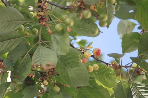20110521 (3) (Small)