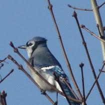 Wildlife in the Greater Toronto Area