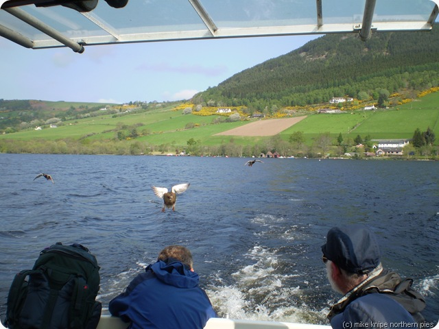 on the loch ness ferry being chased by ducks