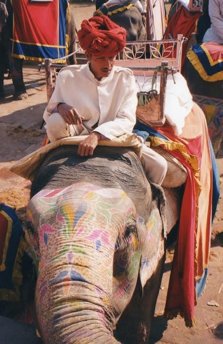 Imagini India: Elefant colorat la Jaipur.jpg