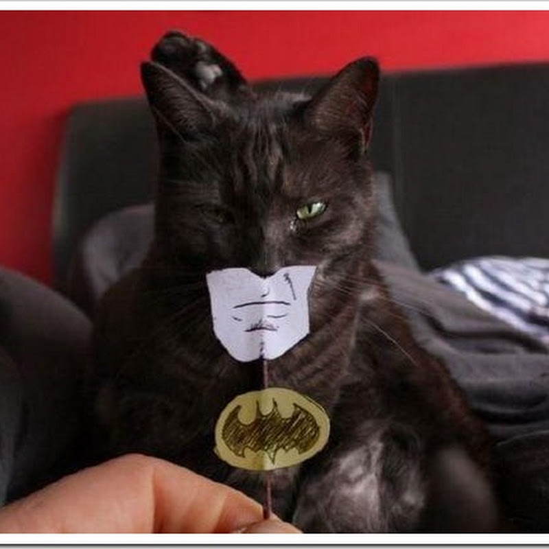 Gato Batman divertidísimo