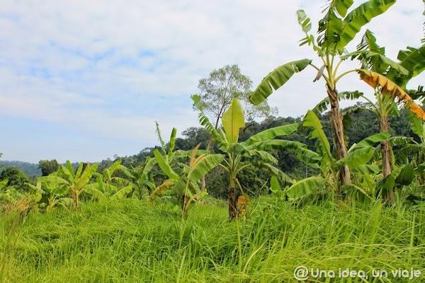 camboya-tekking-jungla-chi-phat-ecoturismo-unaideaunviaje.com-22.jpg