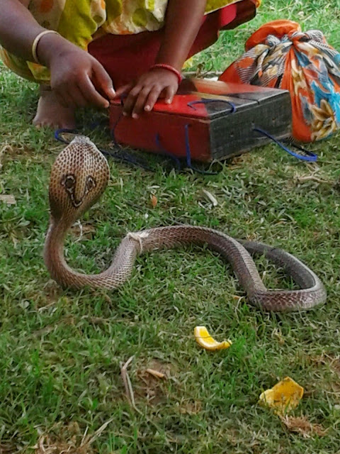 Women Playing with Cobra for Earning Food