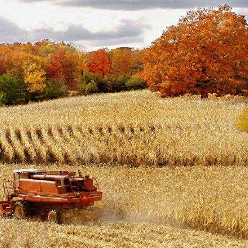 Beautiful Autumn Color Pics