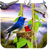Birds Live Wallpaper 3D