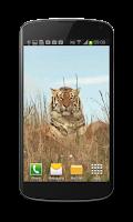 Screenshot of Tiger Free Video Wallpaper