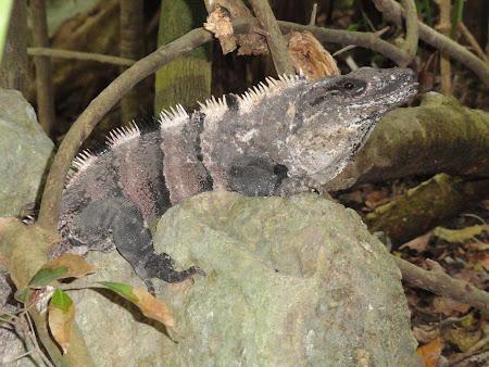 Vacanta Mexic: Iguana Xcaret
