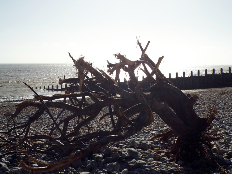 washed up tree