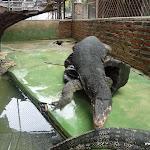Тайланд 17.05.2012 9-48-02.JPG