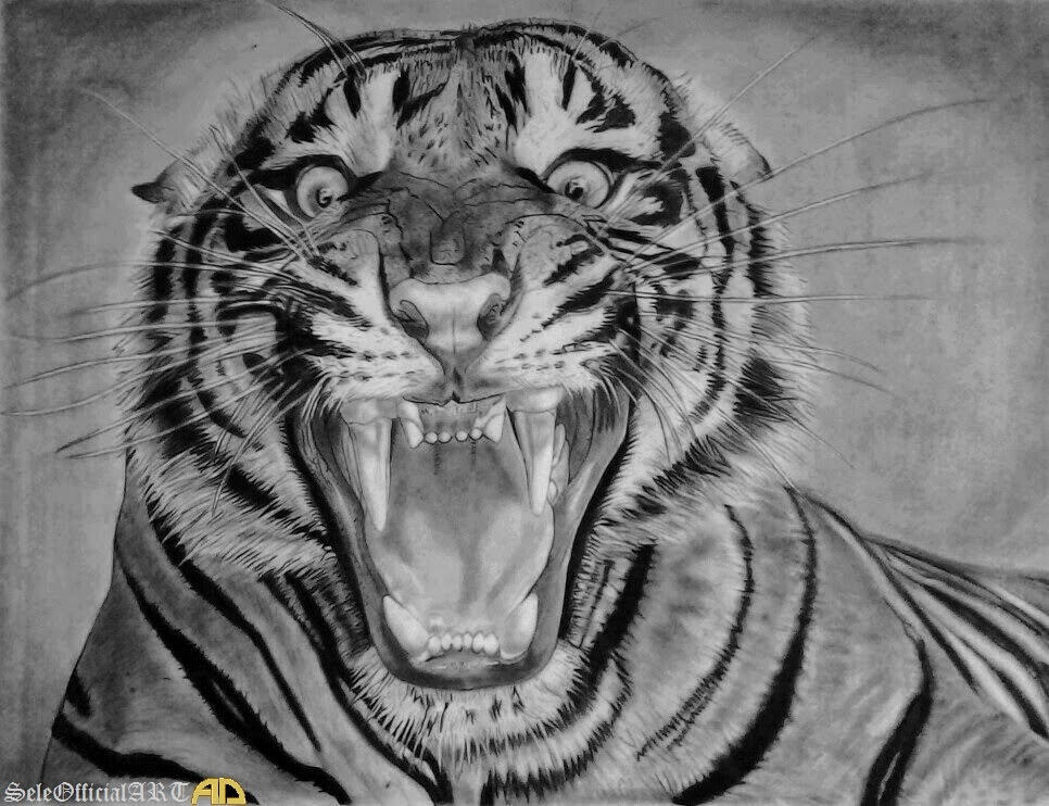 It is a picture of Fan Roaring Tiger Drawing