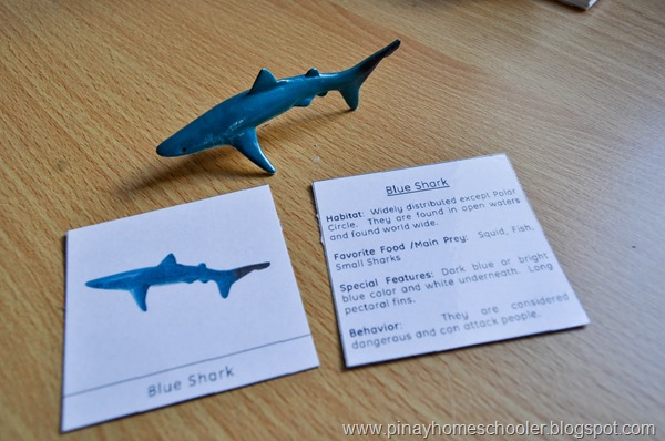 FREE SHARKS MATCHING AND FACT CARDS