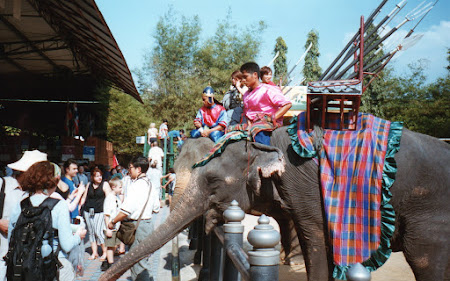 Imagini Bangkok: elefanti mancand