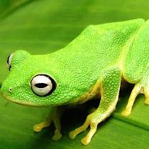 Leap Frog Sri Lanka