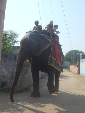 Fun in India: calare pe elefant