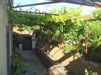 noud-geeft-planten-water.jpg