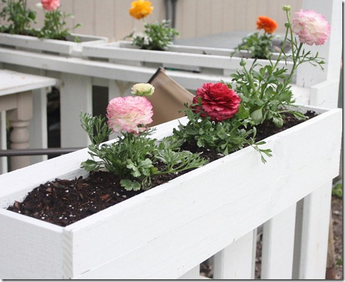 shabby chic flower boxes