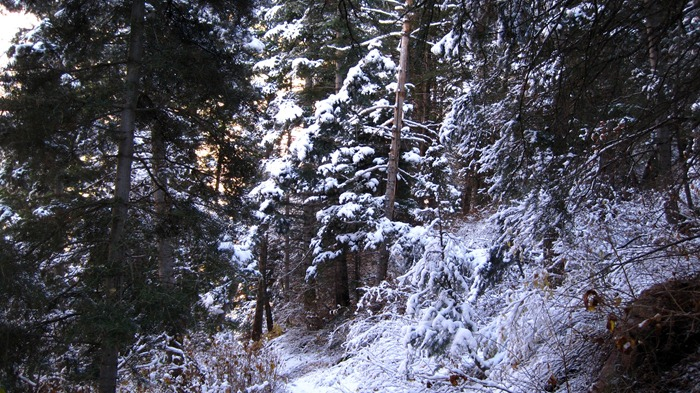 Broad's Fork Trail in Big Cottonwood Canyon