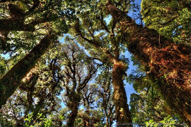 Tree cloud forest walk Doi Inthanon peak