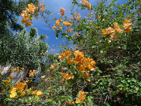 14. flori Madeira.JPG
