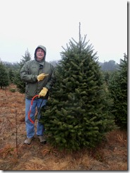 Tree Cutting-1