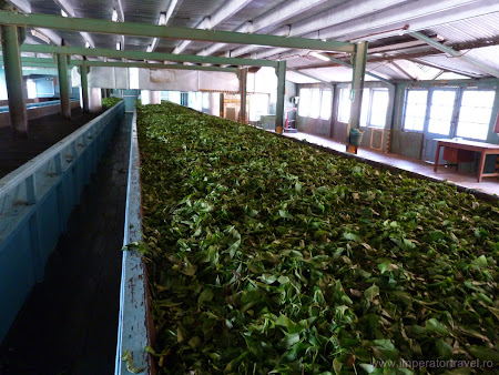 16. fabrica ceai Ceylon Sri Lanka.JPG