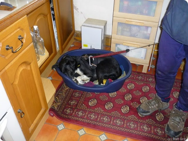 lucky snaffles a dog bed
