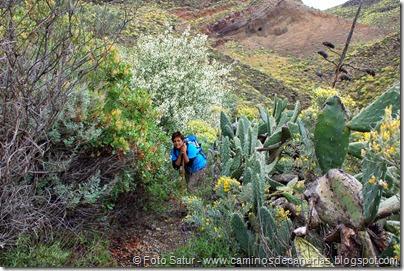 7855 Temisas-Agüimes(Barranco Chorrillo)