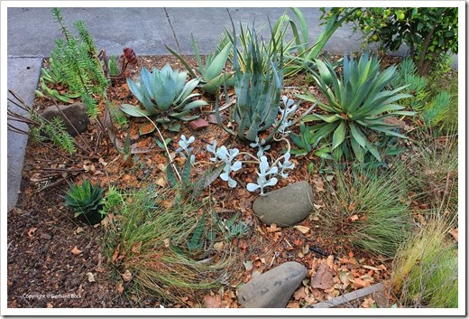 131002_driveway_succulent_bed_before_08