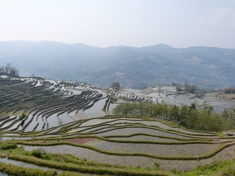 yunnan-rice-terraces-1