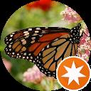 Danaus Plexippus Nymphalidae