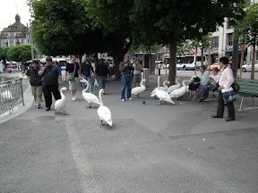 260 - Cisnes.JPG