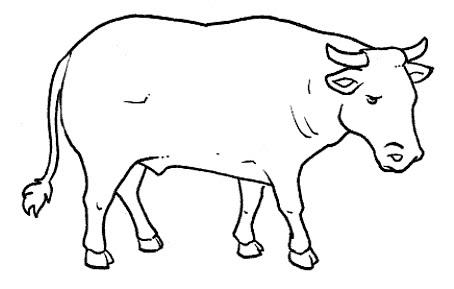Dibujos De Toros Para Colorear