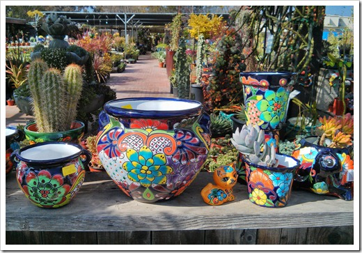 succulents and more terra sol garden center santa barbara